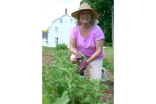 Sabbathday Lake Shaker Village herb gardener, Pam Lanz